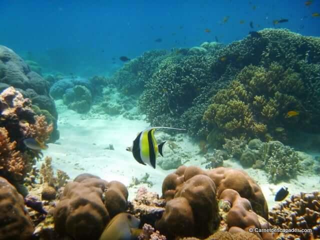 Snorkeling à Pulau Menjangan