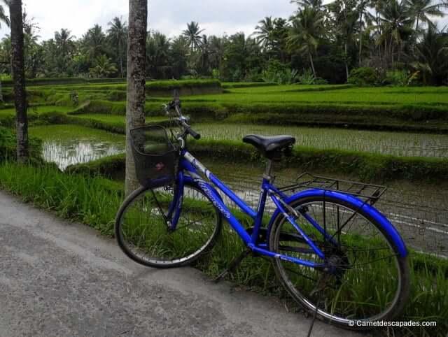 Vélo-rizières d'Ubud-Bali