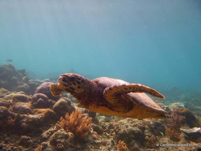 Deux jours à Gili Air – Que faire aux îles Gili?