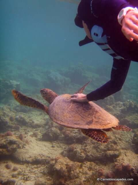 Gili-nager avec tortues