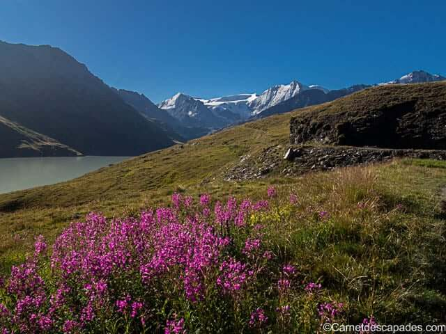 fleurs-lac-dix-val-herens