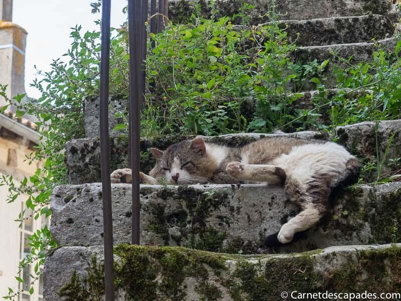 chat-issigeac