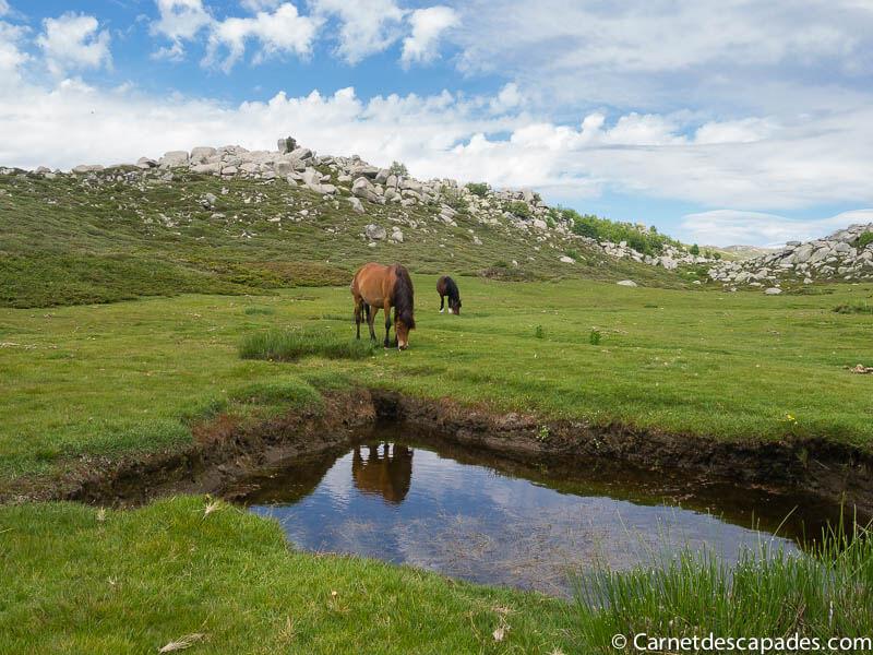 chevaux-liberte-plateau-coscione