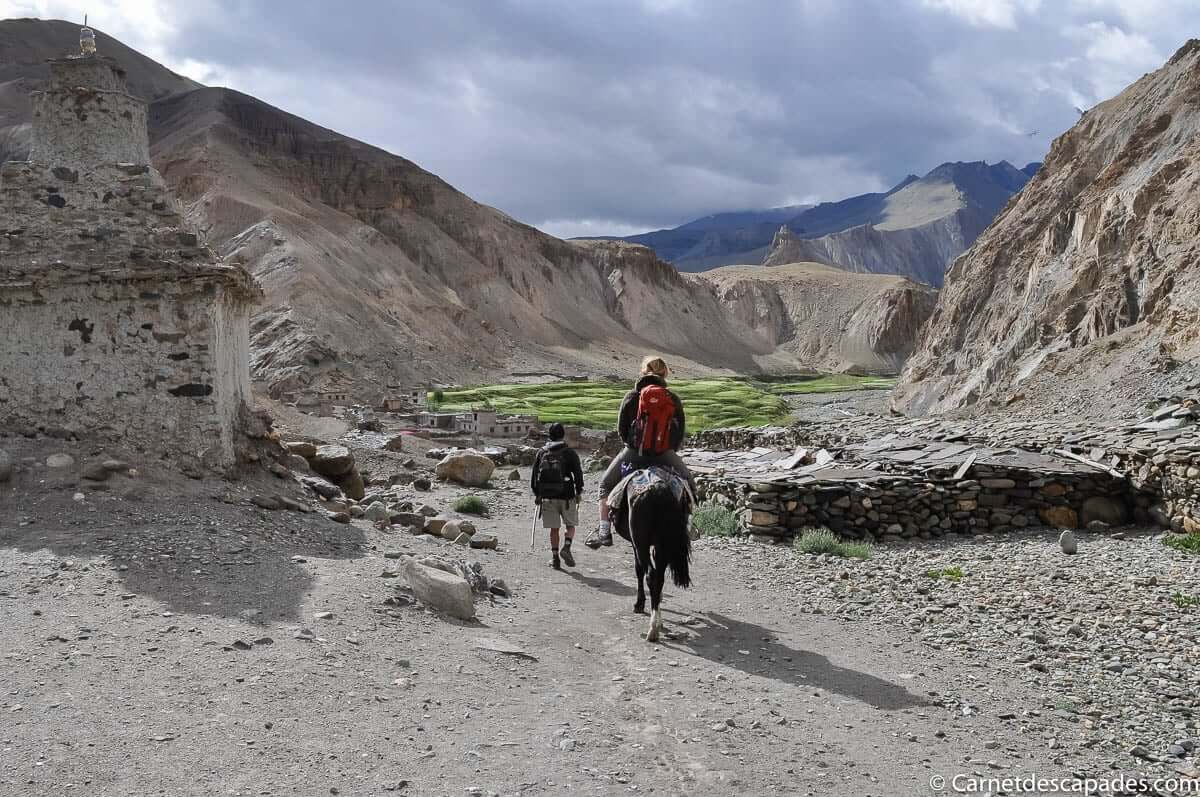 trek-ladakh-cheval