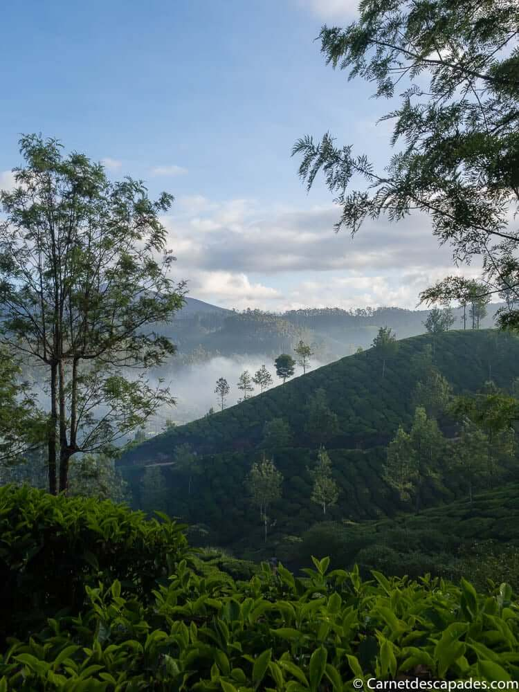 matin-plantations-the-munnar