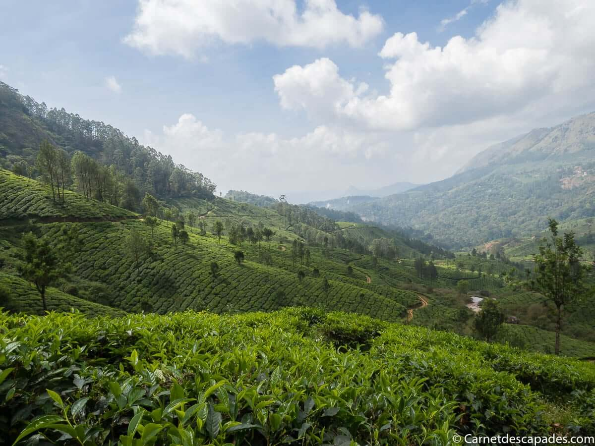 champs-the-munnar-kerala