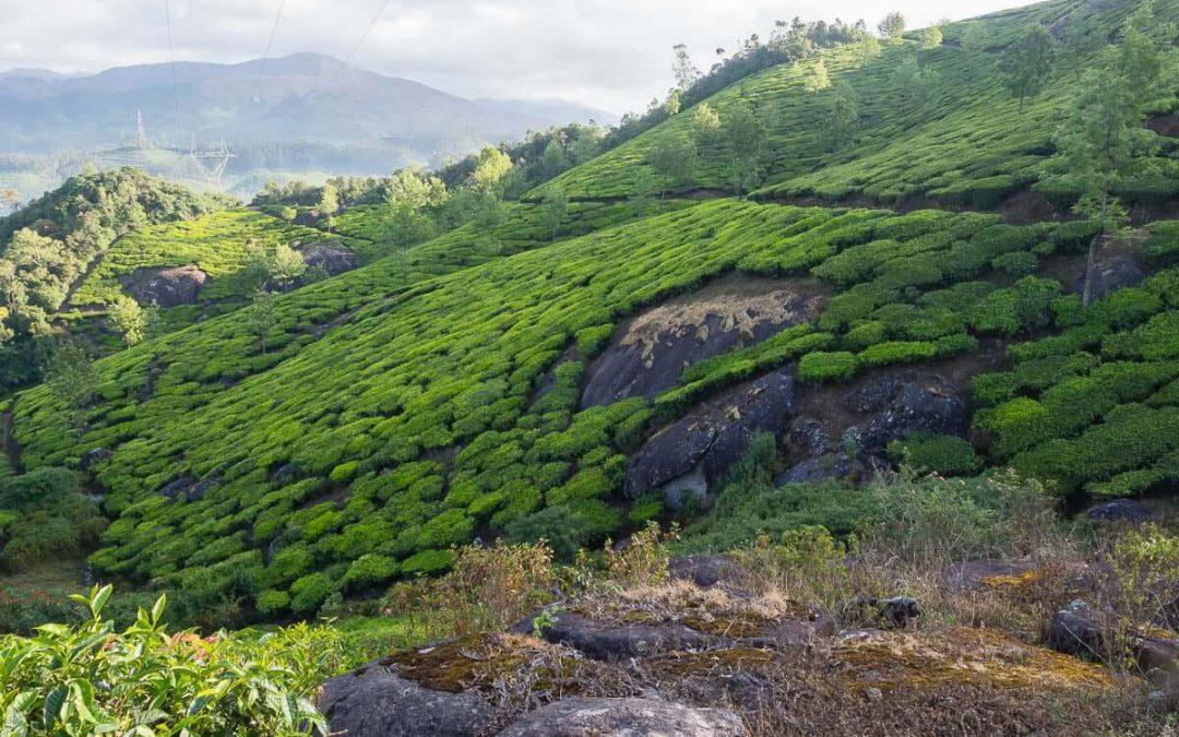 Munnar (Kerala) – Montagnes et champs de thé
