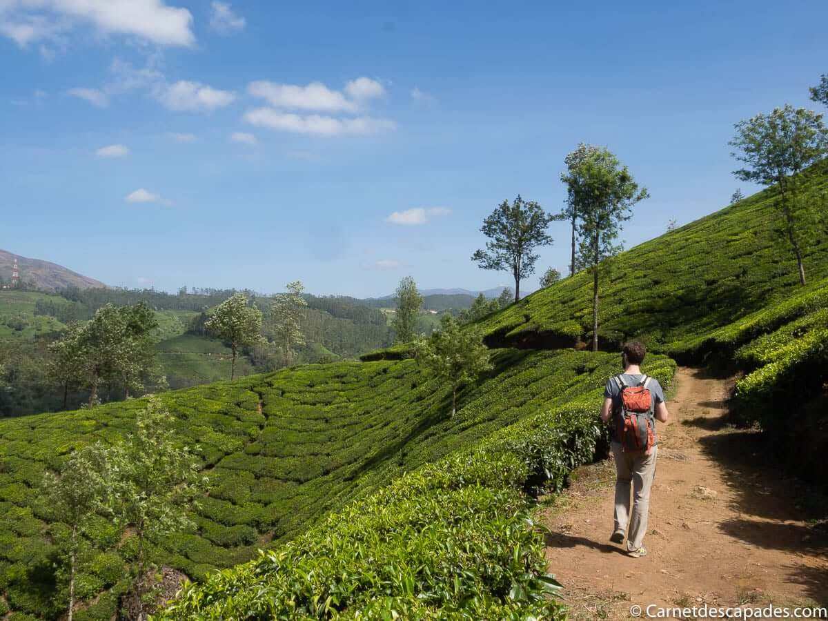 plantations-the-munnar-rando
