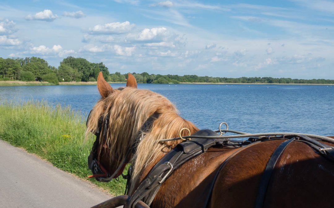 J'ai testé… un week-end en roulotte dans le Parc naturel régional de la Brenne !