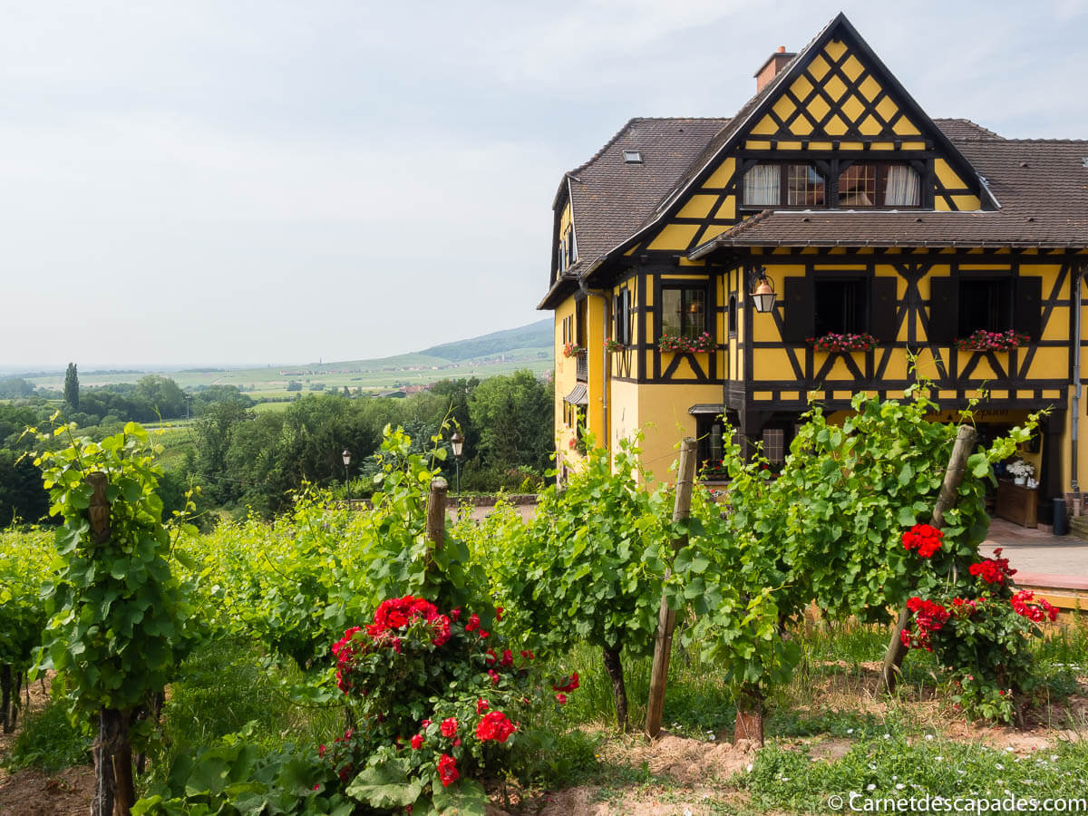 alsace-route-vins-itterswiller