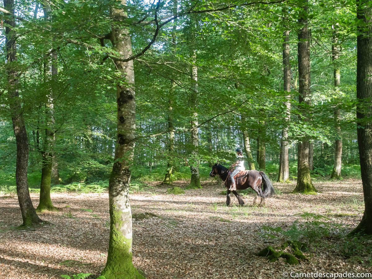 balade-cheval-foret-berce