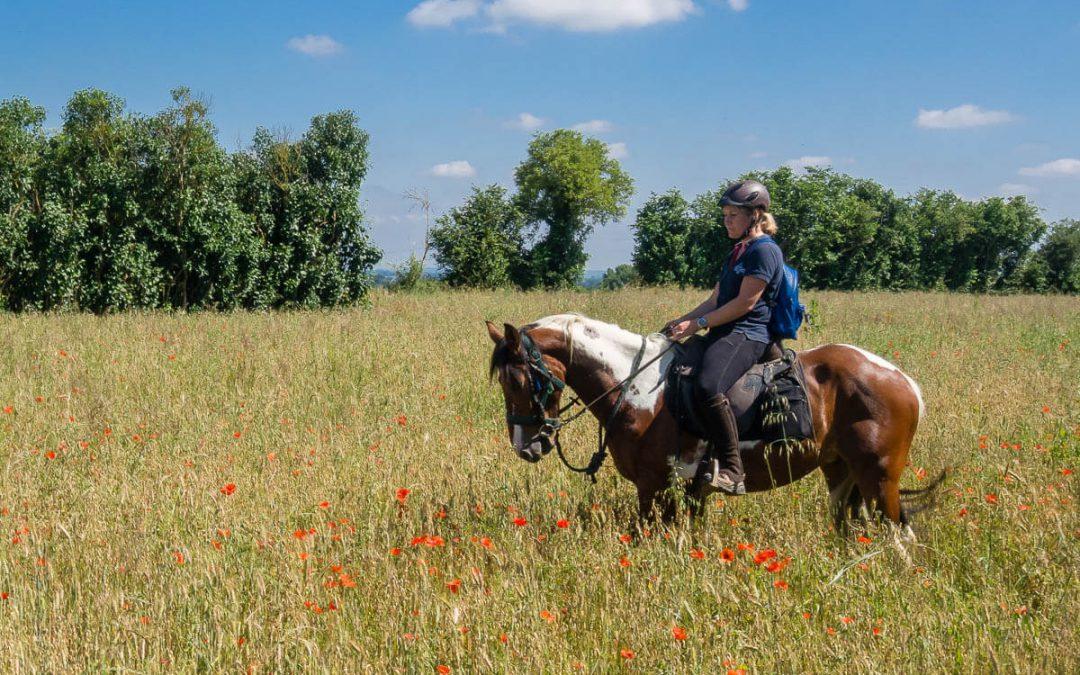 Tourisme en Sarthe – 5 idées d'expériences à cheval