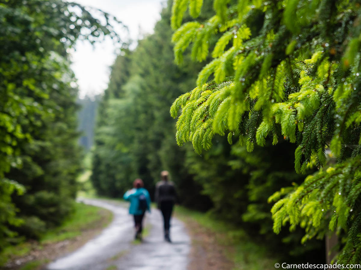 marche-foret-ardenne