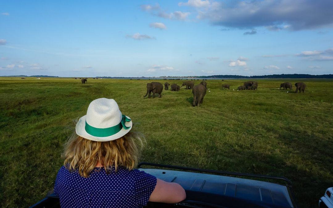 Safari au Sri Lanka – A la rencontre des éléphants