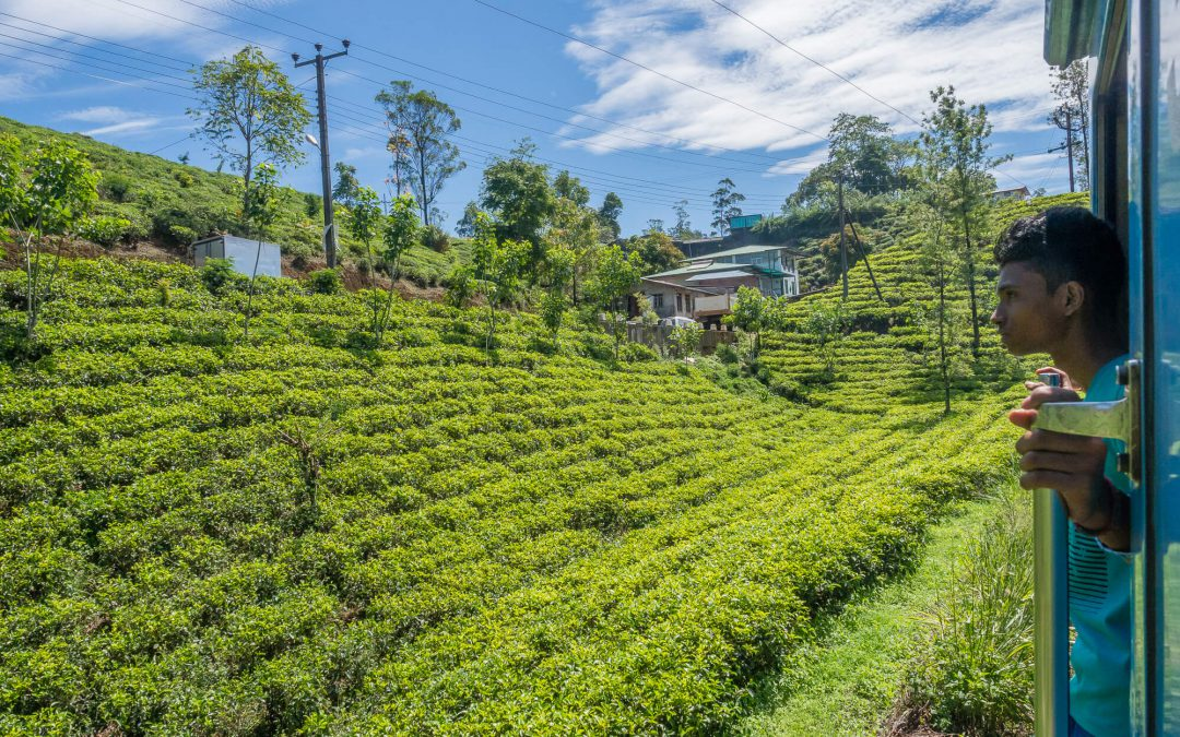 Train Kandy – Nuwara Eliya et plantations de thé