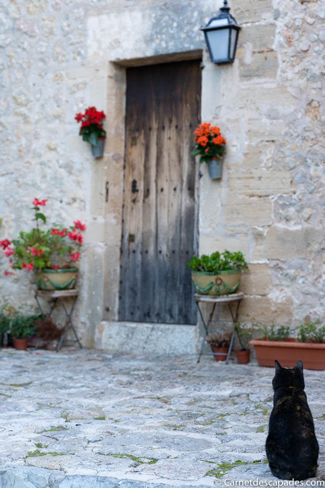 pollenca-chat