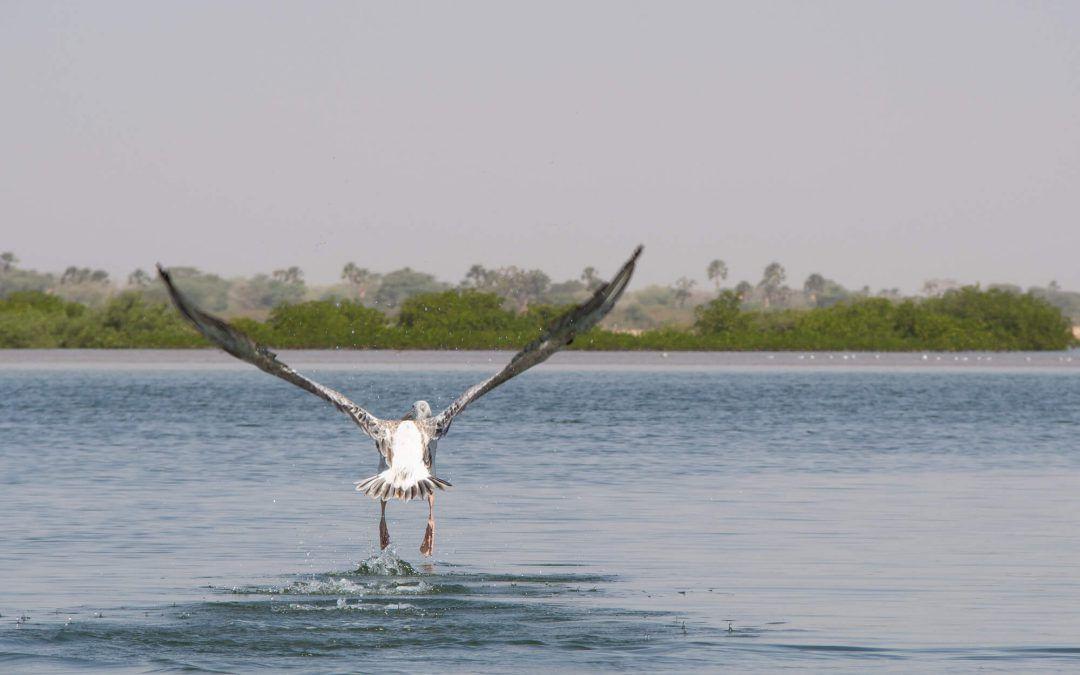 Découverte du Sine Saloum – Palmarin, la mangrove et l'île de Mar-Lodj