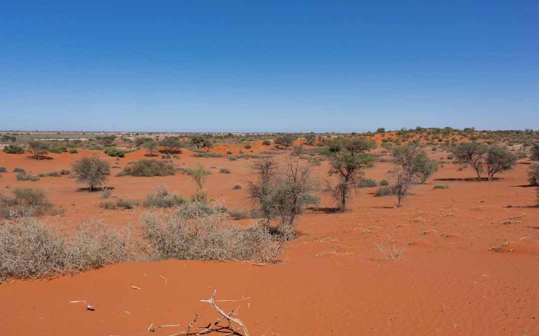Désert du Kalahari – Un désert mythique de Namibie