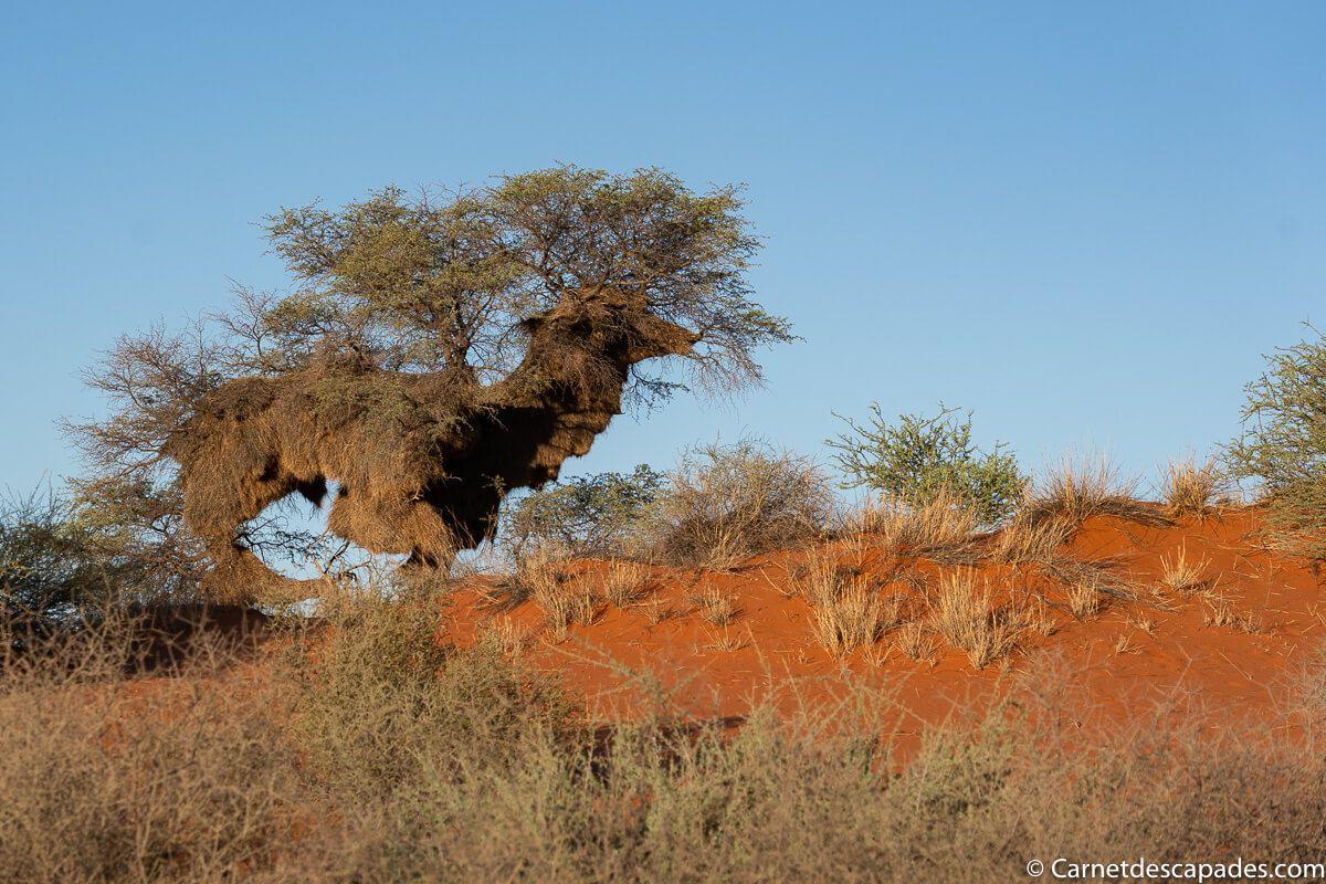 nid-republicains-sociaux-namibie