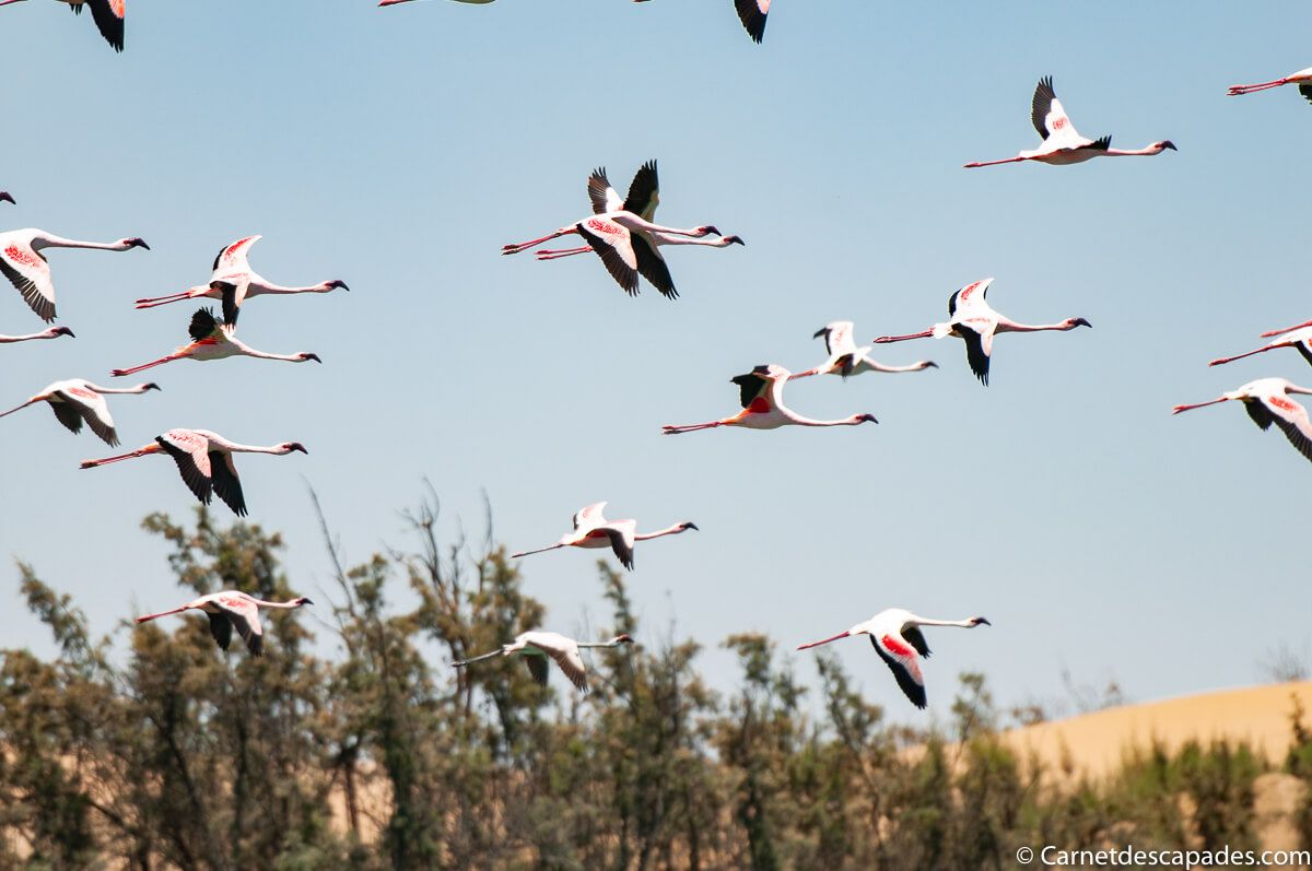 flamants-roses-namibie