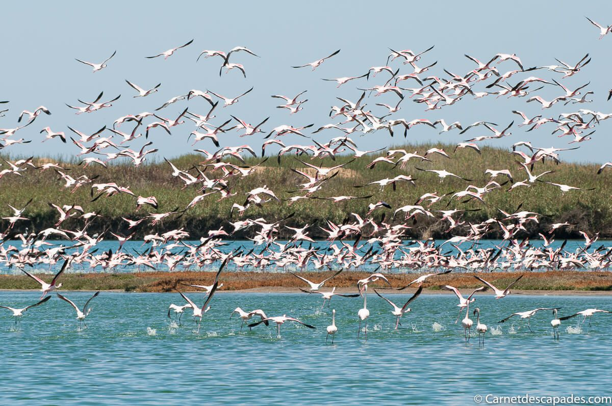 flamants-roses-walfis-bay