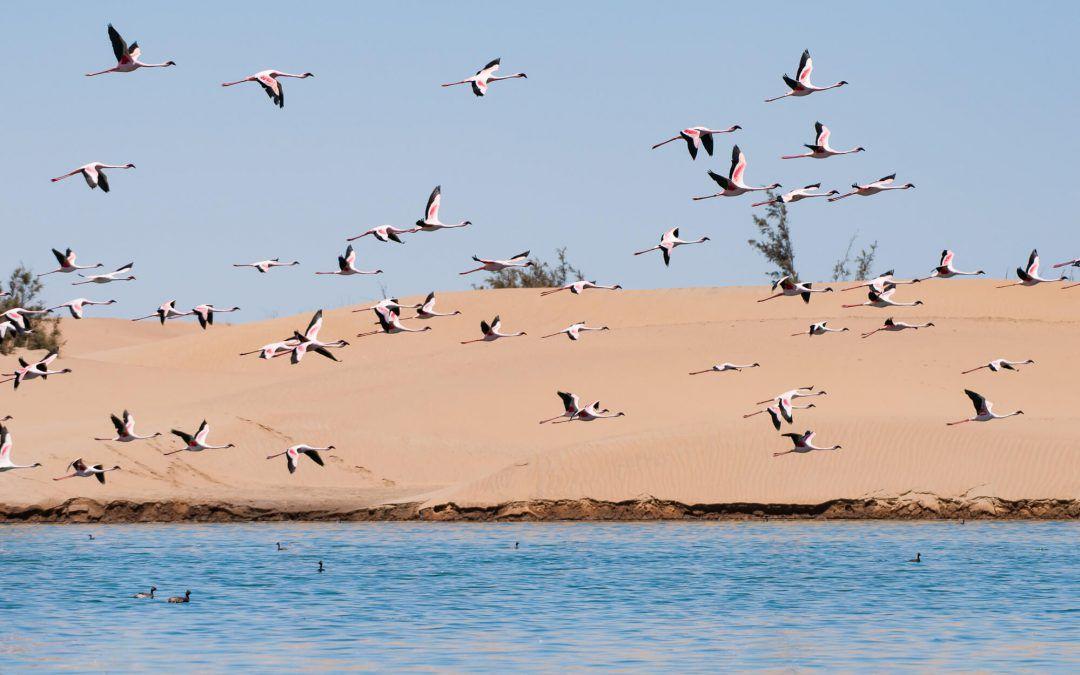Swakopmund et Walvis Bay, sur la côte namibienne