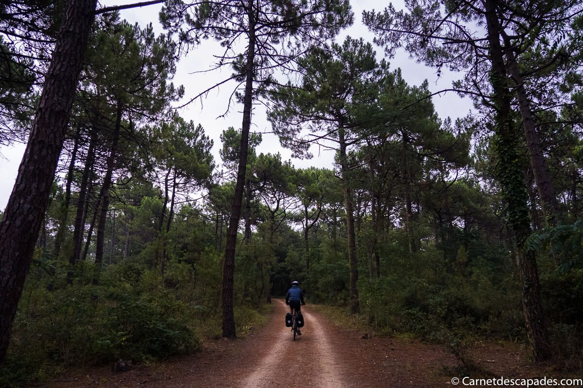 foret-monts-vendee