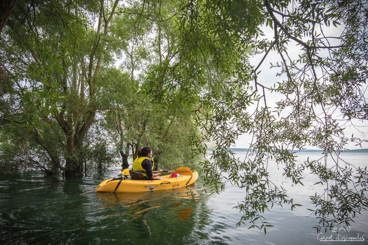 kayak-foret-immergee-lac-orient
