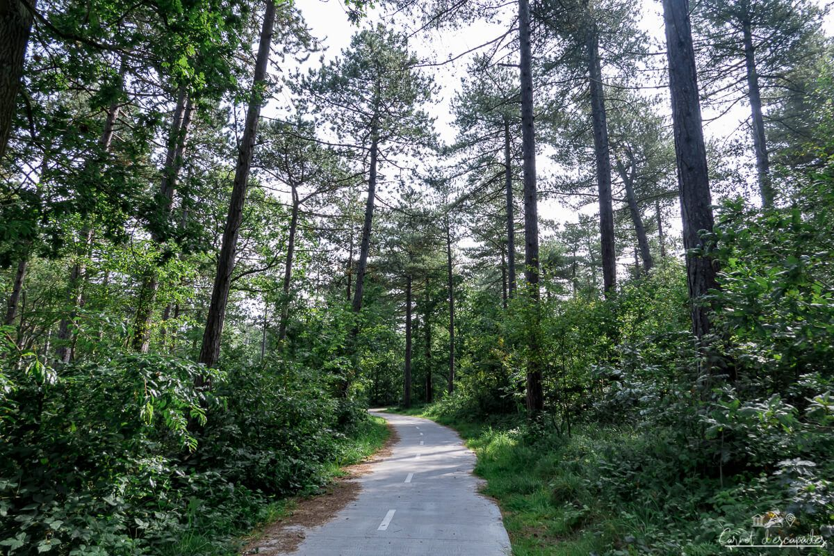 foret-texel