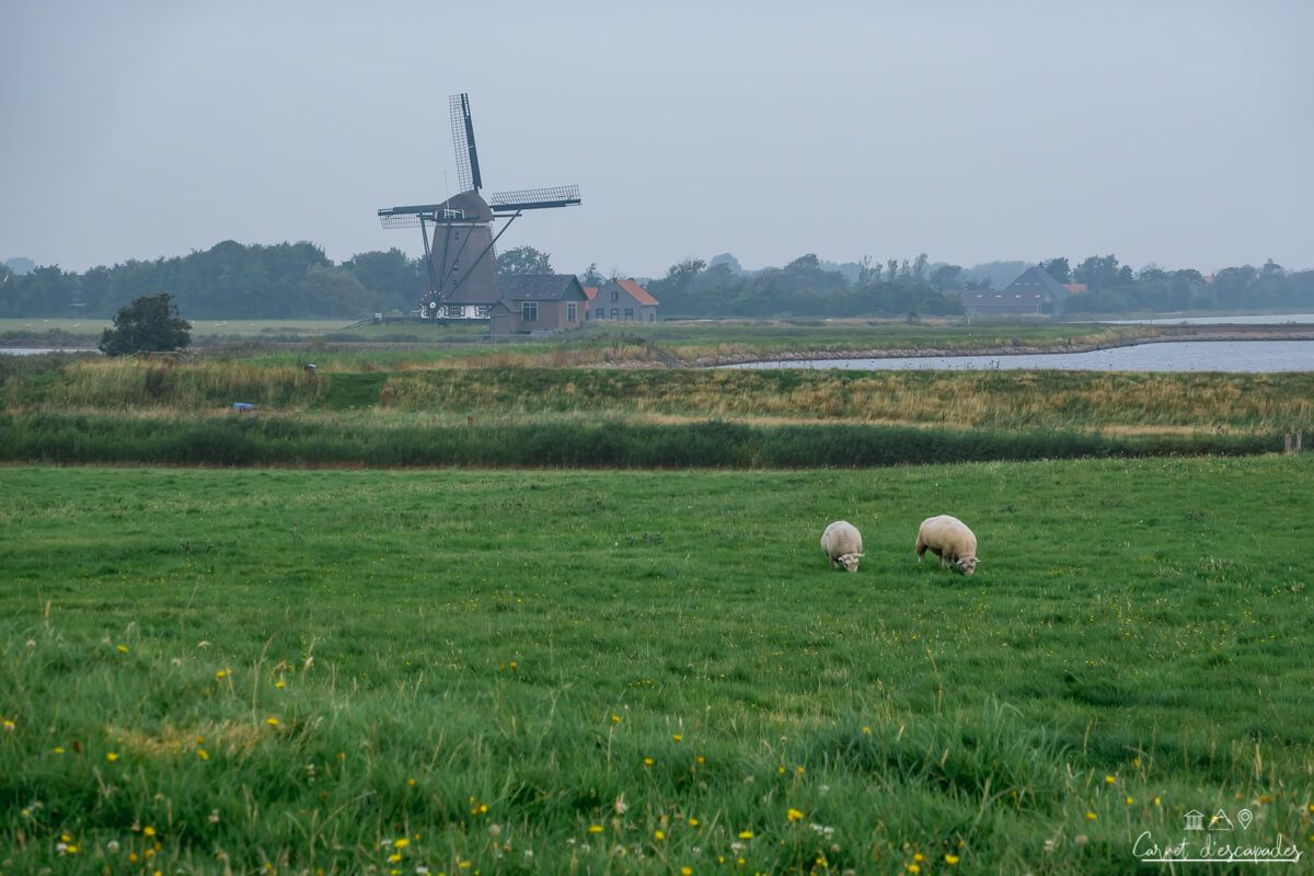 texel-moulin-moutons